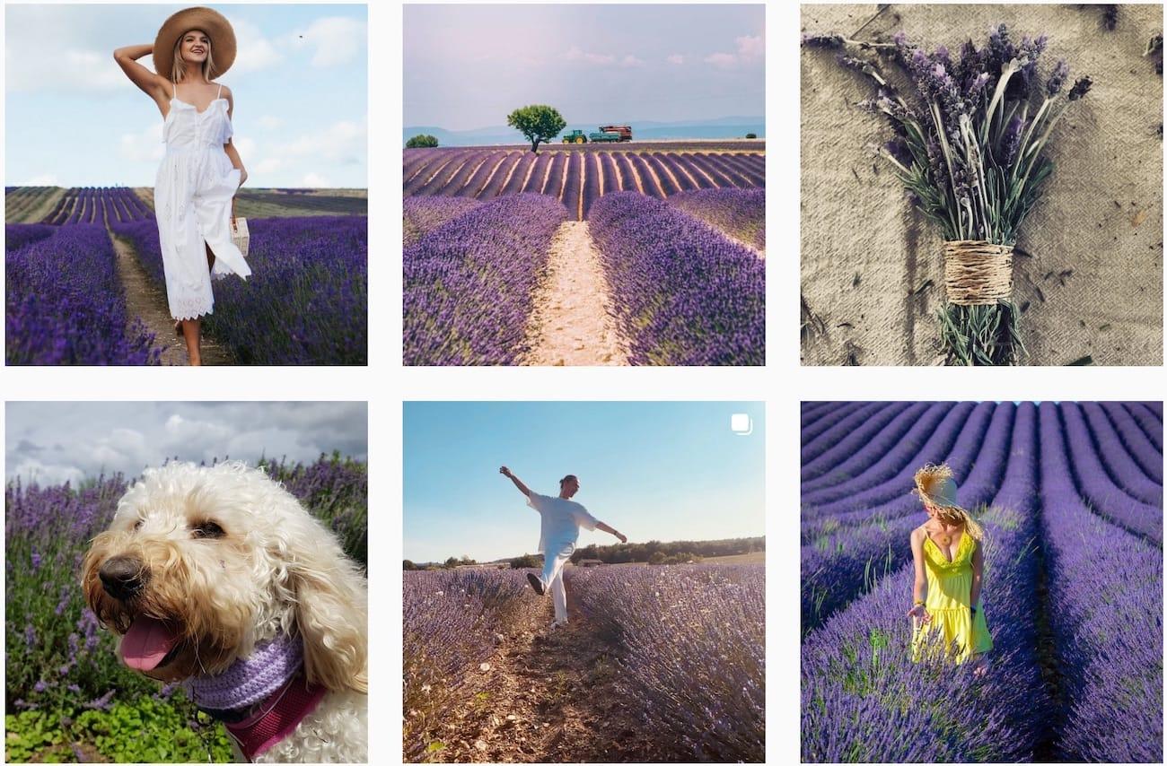 Instagram Effekt Hashtag Lavenderfields
